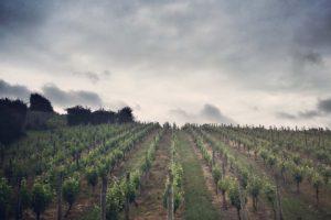 obsidian vineyard 2